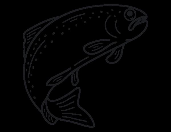 Fisch, Forelle, geräuchert, Räucherfisch, Edersee